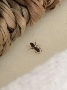 Found this little fella in the bathroom.